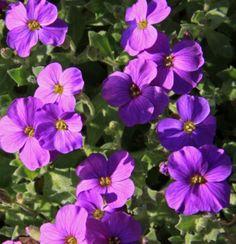 Types of Purple Flowers | Description Purple flowers (3395831028).jpg