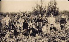 El ayer de la recogida de la uva , bonita estampa de Bodegas muga