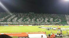 Toyota, Soccer, Sports, Athlete, Football, Hs Sports, Futbol, European Football, Sport