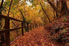 Fotobehang - Bomen & Bos - Herfst 1 - Autumn 1
