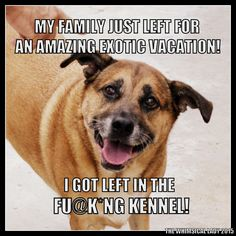 My family went on vacation and I got stuck in the kennel meme. Dog meme. German shepherd boxer meme.