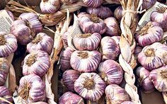 Garlic: A Bulb For All Tastes. The Telegraph catches up with Natasha Edwards to discuss the mighty bulb.