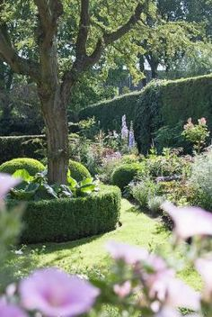 Landscape Design | Privacy Hedge, Curved Garden Bed and Decorative Tree Hedge