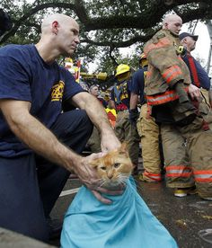 New Orleans firefighters save pets from burning apartment | Shared by LION