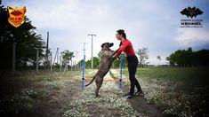 Belona Cerberus Illusion - Cimarron Uruguayo - Trick Dog - Jump wraps St...