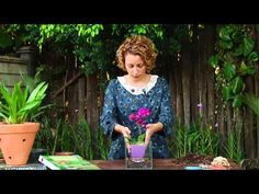 Como Cuidar de Orquídeas - Truque contra o calor - YouTube