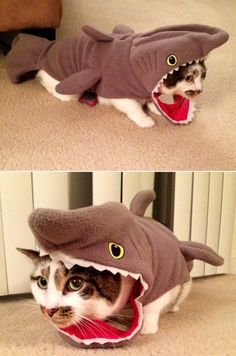 Catshark: Halloween costume idea for your cat | best stuff