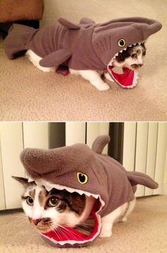 Catshark: Halloween costume idea for your cat | best stuff