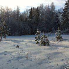 Winter @ Villa Strandbo