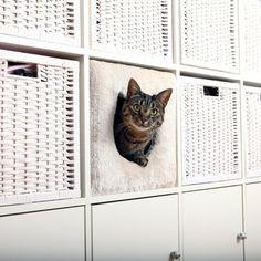 Cat cave (passar Expedit och Kallax) | Supercat.se