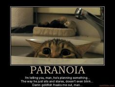 cat logic....