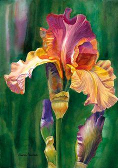 .gorgeous iris
