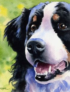 BERNESE MOUNTAIN DOG Original Watercolor Painting by Artist D J Rogers