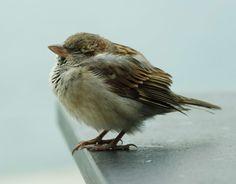 Baby sparrow.. haha! Love. <3