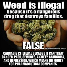 Weed is illegal because it's a dangerous drug that destroys families.  FALSE!  Cannabis is illegal because it can treat cancer, PTSD, seizures, anxiety, glaucoma, and depression which means no money for pharmaceutical companies. (Posted to my page 11/3/16.)