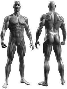 Muscle Map choose muscle group for workout