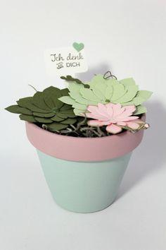 Gastgeschenke - Succulente (mix) groß  - ein Designerstück von Die-Fraeuleins-Krims-u-Krams bei DaWanda