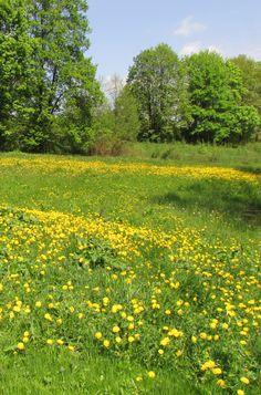 Konserwowanie ziół – metody – Zielicha Nature Aesthetic, Flower Aesthetic, Farm Away, Different Aesthetics, Mother Nature, Herbs, Landscapes, World, Places