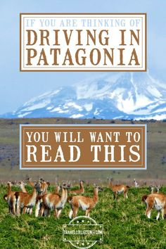 Guide to driving in Patagonia. Tips for driving (including how to manage the wind, animals to look out for and what types of roads to avoid); driving distances; international borders between Chile and Argentina; locations of gas stations; and tips for renting cars and taking them across international borders #patagonia #driving #chile #argentina #traveltips #travelcollecting Patagonia Travel, In Patagonia, Packing List For Travel, Travel Tips, Travel Advise, Rock Climbing Gear, Iguazu Falls, Argentina Travel, South America Travel
