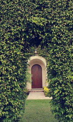 stunning hedge