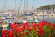A floral-tastic view of Victoria Marina, St Peter Port.