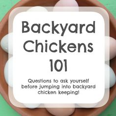 Backyard Chickens 101 - Questions to ask yourself before jumping in to backyard chicken keeping