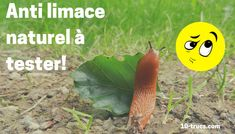 anti limace naturel Permaculture, Planters, Growing, Garden, Plants, Insecticide