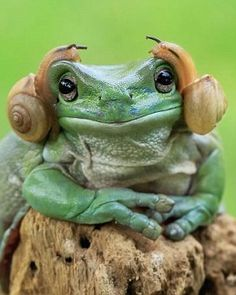 Froggy with fancy snails