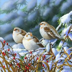 """Seeking Shelter "" - Snow Buntings - Illustration/Painting by Bradley Jackson Jackson's Art, Bird Drawings, Drawing Birds, Bird Pictures, Cross Paintings, Wildlife Art, Bird Art, Bird Feathers, Belle Photo"