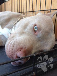 """Tell me a story!"" #dogs #pets #Pitbulls Facebook.com/sodoggonefunny"
