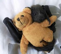 Baby bat with a teddy bear