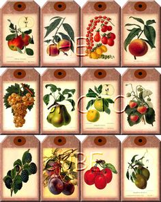 BuY OnE GeT OnE FREE - FRuiT Vintage Art Hang/Gift Tags Printable Collage Sheet JPG Digital File-Apples, Plums, Pears, Grapes, Peaches