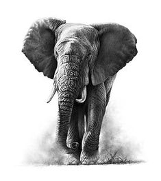 Pencil Drawings Of Love, Pencil Drawings Of Animals, Elephant Sketch, Elephant Art, Graphite Art, Graphite Drawings, Wildlife Paintings, Wildlife Art, Elephant Afrique