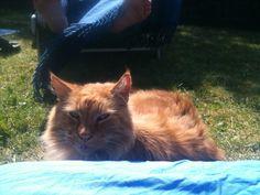 Garfield Kat | Pawshake