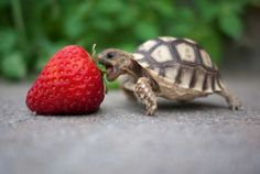Lovely turtle.