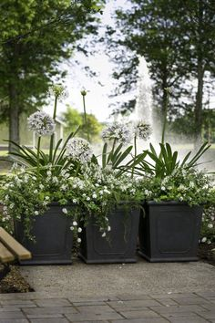 "The ""queen mum"" agapanthus. She is tall and regal and full of blooms. The lavender petals are so soft and feminine as if painted with watercolors. She is also unbelievably easy to grow! Keep her in full sun and part shade. + The white lantana is perfect for anyone with black thumbs. She does not need much water and is nearly impossible to kill. We used her and the white angelonia to really ground the queen mum. For a little extra texture, I added some rosemary."
