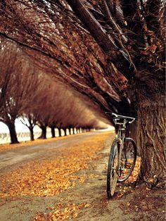 | November | . . . biking the bronze and amber earth