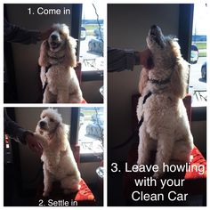 Come in with your best friend and have your car detailed. You will be howling with your clean car :)