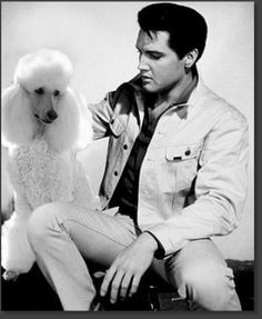 """This is definitely not a """"hound dog""""! Elvis loved his poodle and even had poodle wallpaper. A real man loves a poodle mx Elvis Presley, I Love Dogs, Puppy Love, French Poodles, Standard Poodles, Poodle Cuts, Vintage Dog, Australian Cattle Dog, Dog Life"""