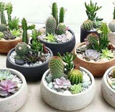 Mini Cactus Garden, Succulent Gardening, Succulent Terrarium, Cacti And Succulents, Indoor Succulent Garden, Garden Terrarium, Gardening Tips, Succulent Display, Decoration Plante
