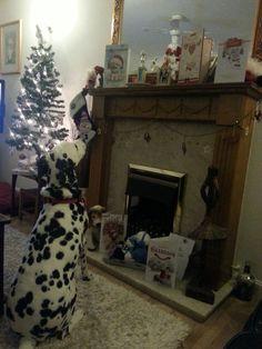 Hector at Christmas