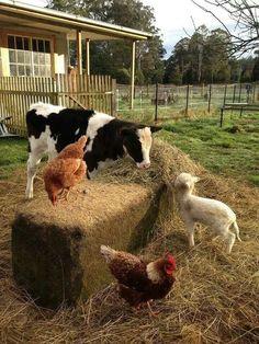 Country farm living. I'd go for small country farm living!!