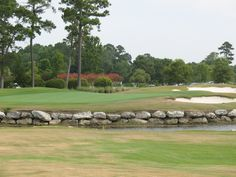 Tiger's Eye Golf Course--Myrtle Beach.  Seen alligator by the water, was a sight to see.