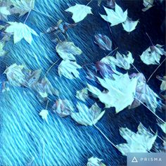 #leaf #nature #prisma