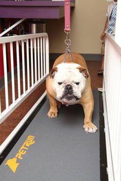 112 best best dog treadmills images on pinterest in 2018 dog