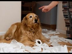 The Cutest Guilty Dog Video Compilation - Love the last dog!!  How could anyone stay mad at these sweet, funny dogs?