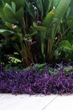 The Rainforest Garden: Tropical Color in the Summer Garden