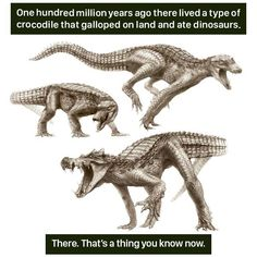 Animal-Facts-Weird Nature The Effective Pictures We Offer You About animal facts wild A quality pict Dinosaur History, Dinosaur Art, Dinosaur Crafts, Dinosaur Bones, Weird Animal Facts, Weird Facts, Fun Facts, Movie Facts, Crazy Facts