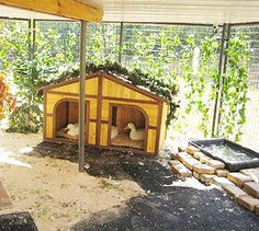 duck shelter and yard