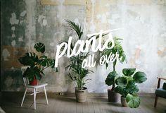 Ich liebe Pflanzen. Meine Daumen war nicht immer grün und sind es bis heute  nicht wirklich, aber ich habe das Gefühl, dass es mit zunehmenden Alter  besser wird.  Spannende Blogs wie Urban Jungle Blogger, the Planthunter, the Hanging  Plantsoder auch Magazine wie Pflanzenfreude.de und The Plant geben  Pflanzen einen ganz neuen Stellenwert. Ganz offiziell: Pflanzen sind cool!  Es gibt richtige Pflanzentrends, ach was sage ich Hypes. Keine Hipsterbude  ohne Sukkulente, Feigenbaum oder…